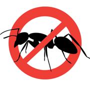 Уничтожение тараканов, клопов Калининград